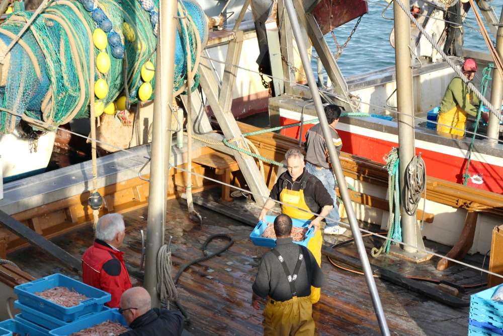 Dénia con niños puerto pescadores 4