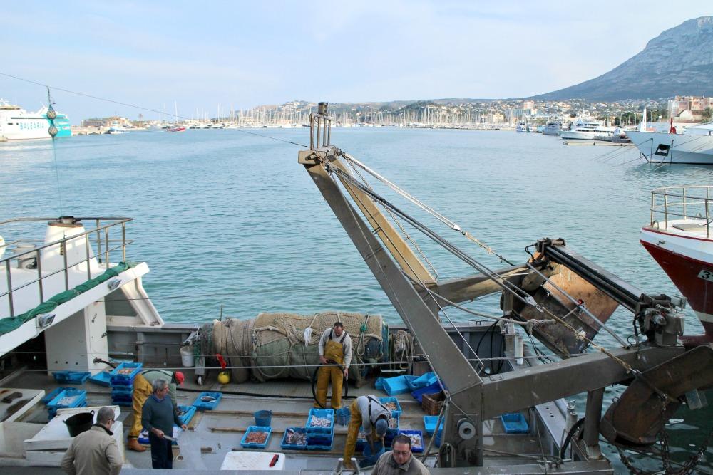 excursión lonja pescado Dénia 1