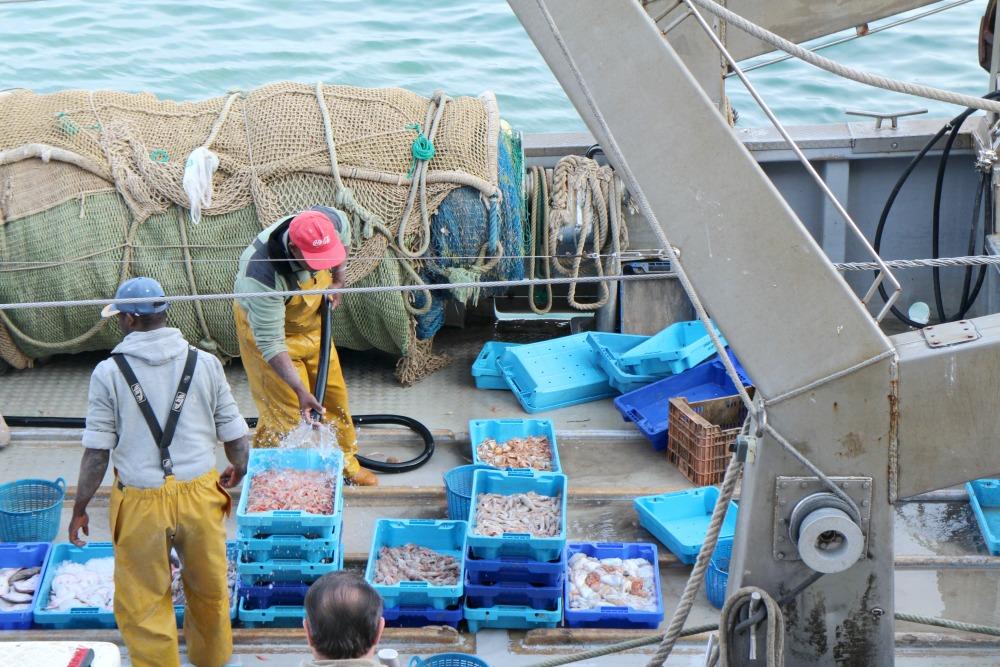 excursión lonja pescado Dénia 2