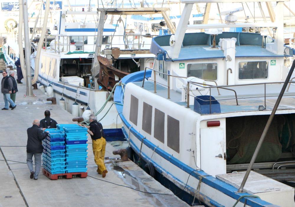 excursión lonja pescado Dénia 5