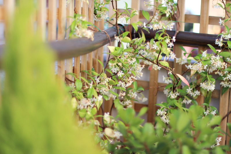 decoración terraza bonita con césped 9